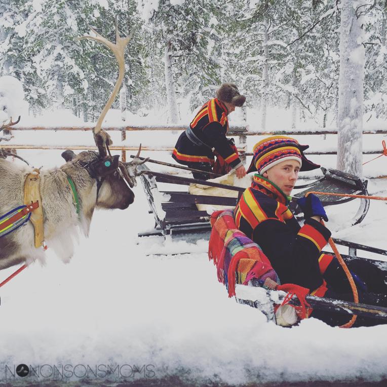 sami reindeer lapland
