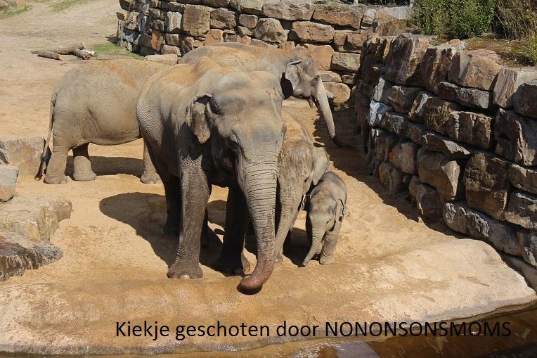 olifantjes def (2)